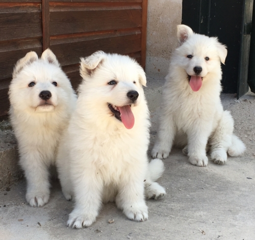 Cachorro_8