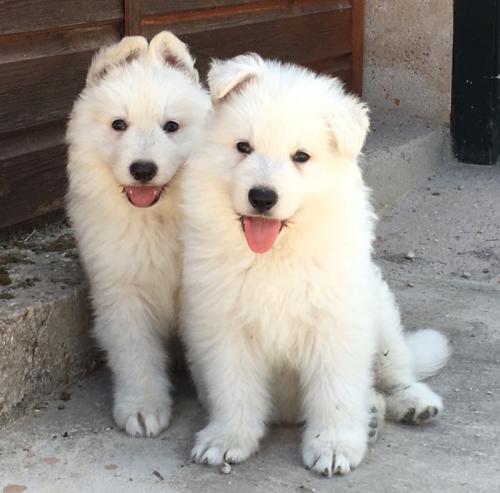 Cachorro_6