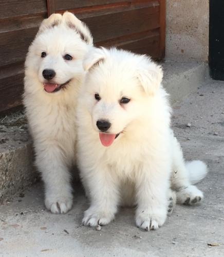 Cachorro_7
